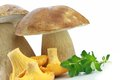Porcini and Chanterelle Mushroom Royalty Free Stock Photo