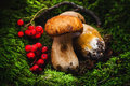 Porcini mushroom Royalty Free Stock Photo