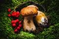 Porcini mushroom Royalty Free Stock Photo