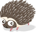 Porcupine Stock Photo