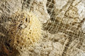 Porcupine fish in the fishing net Stock Images