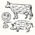 Pork and beef cuts hand drawn set Stock Photos