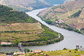 Port wine vineyards landscape on the hills and river douro near porto portugal Stock Images