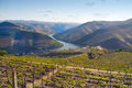 Port wine vineyards landscape and river douro in porto portugal Stock Images