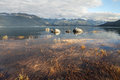Portage cove sea grass in evening rocks and seagulls near hains alaska light Stock Images