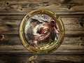 Porthole with hippopotamus Stock Photography