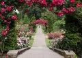 Portland Oregon rose garden Royalty Free Stock Photo