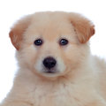 Portrait of adorable puppy dog with smooth hair isolated on white background Stock Photos