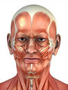 Portrait of anatomical man Royalty Free Stock Photography