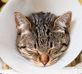 Portrait of an anesthetized cat with an elizabethan collar inside home Stock Photos