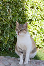 Portrait of a beautiful cat on the street Royalty Free Stock Photos