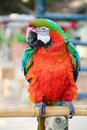 Portrait beautiful colorful macaw parrot close up Stock Image