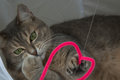 Portrait beautiful domestic cat playing pink toy