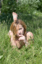 Portrait of a beautiful naked girl on grass Royalty Free Stock Images