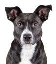 Portrait of black cute dog Royalty Free Stock Photo