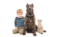 Portrait boy dog and kitten sitting together Stock Photography