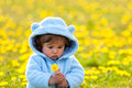 Portrait of a boy in spring flowers field cute Stock Photos