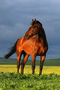Portrait of brown horse on sunset Royalty Free Stock Photo