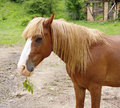 Portrait of brown horse with twig in muzzle Royalty Free Stock Photography