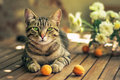 Portrait of a cat with fruits Royalty Free Stock Photo