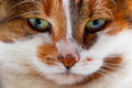 Portrait of a cat s hypnotizing look close up Royalty Free Stock Image