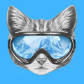 Portrait of Cat with ski goggles.