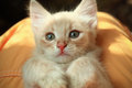 Portrait of a cute kitten little light red Royalty Free Stock Photo