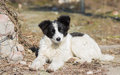 Portrait of cute mixed breed stray puppy under warm spring sun Royalty Free Stock Photos