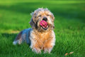 Portrait of a cute old dog Royalty Free Stock Photo