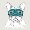 Portrait of a dog in motorcycle glasses. Vector illustration