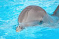 Beautiful dolphin in blue water Royalty Free Stock Photo