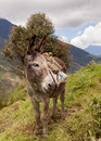 Portrait of a donkey ecuador mountains south america Royalty Free Stock Photography