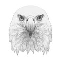Portrait of Eagle. Royalty Free Stock Photo