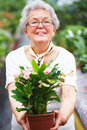 Portrait of an elderly woman showing a plant Royalty Free Stock Photography