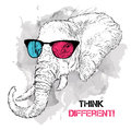 Portrait of the elephant in the colored glasses. Think different. Vector illustration. Royalty Free Stock Photo