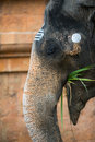 Portrait of an elephant in indian temple tamil nadu Stock Photos