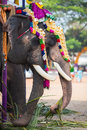 Portrait of an elephant in indian temple tamil nadu Royalty Free Stock Images