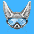 Portrait of Fennec Fox with ski goggles.