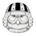 Portrait of fluffy persian cat Wild animal wearing rugby helmet Sport illustration