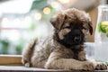 Portrait of fluffy puppy, sitting