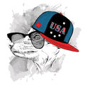 Portrait of fox in the glasses, headphones and hip-hop hat with print of USA. Vector illustration.