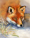 Portrait of a fox vintage watercolor winter Stock Images