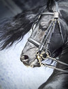 Portrait of friesian horse Royalty Free Stock Photo