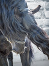 Portrait of friesian horse closeup Royalty Free Stock Images