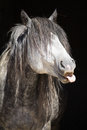 Portrait of funny wild horse Royalty Free Stock Photo