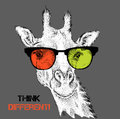Portrait of the giraffe in the colored glasses. Think different. Vector illustration. Royalty Free Stock Photo