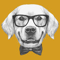 Portrait of Golden Retriever with glasses and bow tie.