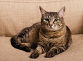 Portrait of green-eyed cat Royalty Free Stock Photo