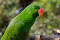 Portrait of green parrot beautiful on the background forest Royalty Free Stock Image