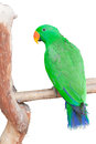 Portrait of green parrot photograph and imaging to isolated on white background Stock Photo
